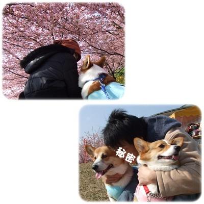 まつだ桜まつり&ふれあいどうぶつ村【22.2.22】NO7