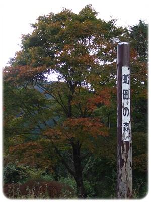 紅葉狩り第二弾【22.11.3】 NO5