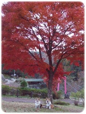 紅葉狩り第三弾【22.11.18】 NO16