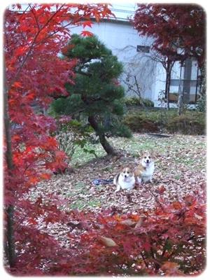 紅葉狩り第三弾【22.11.18】 NO18