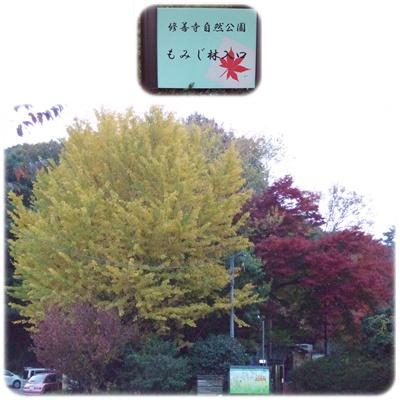 紅葉狩り第四弾【22.11.25】 NO13