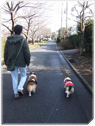 とある日の散歩♪ NO1