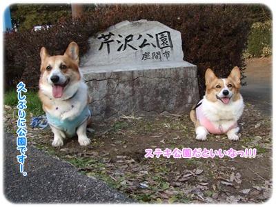 芹沢公園【23.1.13】 NO1