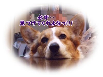 芹沢公園【23.1.13】 NO14
