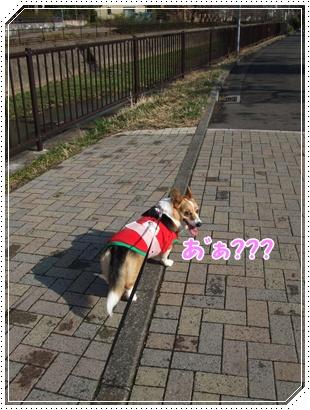 とある日の散歩♪ NO4