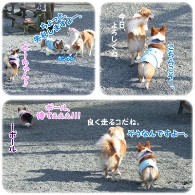 PLAYFUL DOG【22.3.5】NO2