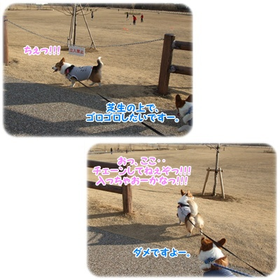 芹沢公園・続編【23.1.16】 NO12