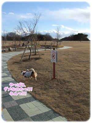 芹沢公園・続編【23.1.16】 NO14