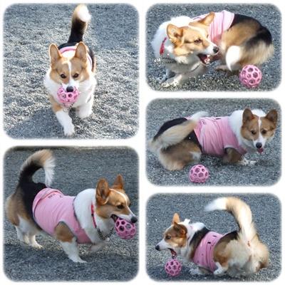 PLAYFUL DOG【22.3.5】NO3