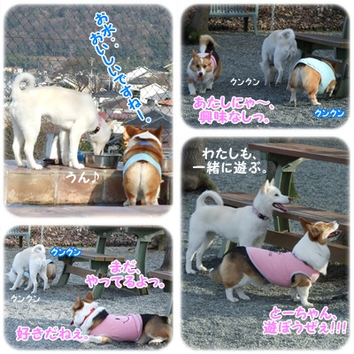 PLAYFUL DOG【22.3.5】 NO5