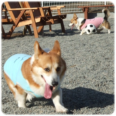 Dogrun Airy【22.1.27】NO7