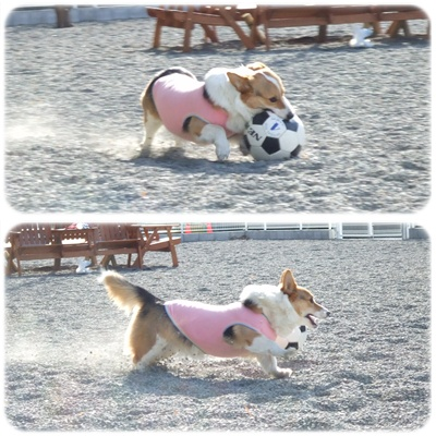 Dogrun Airy【22.1.27】NO8