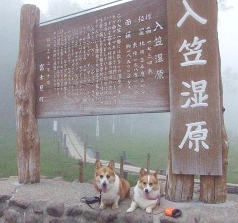 富士見パノラマリゾート すずらん祭り【23.6.16】 NO11