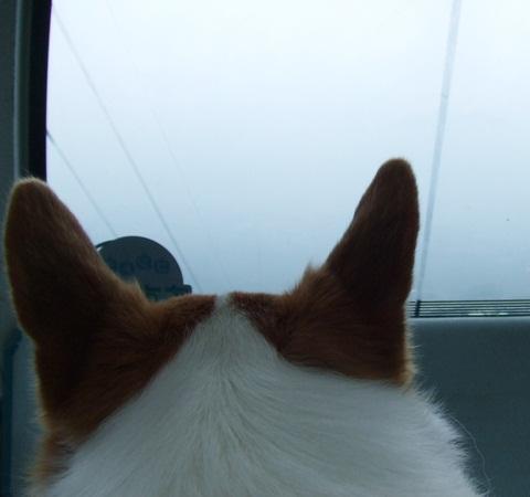 富士見パノラマリゾート すずらん祭り【23.6.16】 NO14