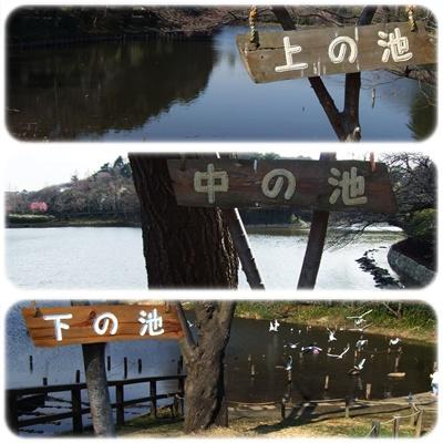 県立 三ッ池公園【22.3.17】NO2