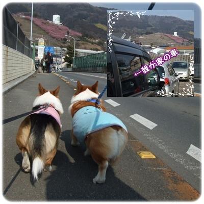 まつだ桜まつり&ふれあいどうぶつ村【22.2.22】NO2