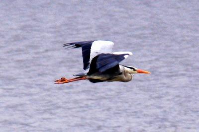 サギ湖の羽ばたき