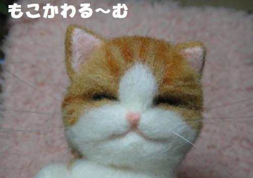 ねんね茶白4