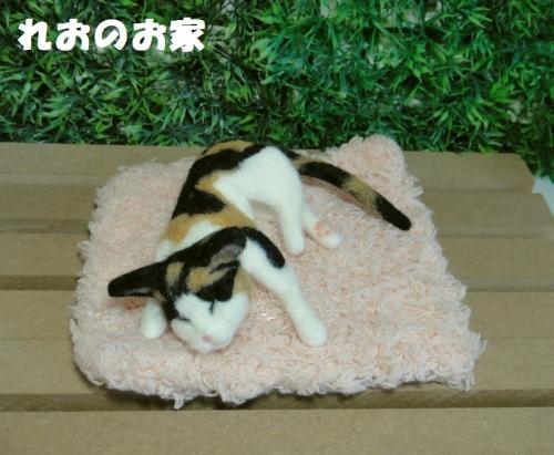 ねんね三毛猫1
