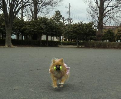 002繝シ繧ウ繝斐・_convert_20130215204112