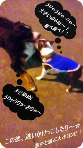 pol-3bosu9_convert_20110930170916.jpg