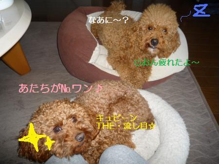 P1000866_convert_20100513174831.jpg