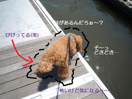 P1000897_convert_20100513174242.jpg
