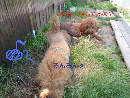 P1000920_convert_20100517175752.jpg