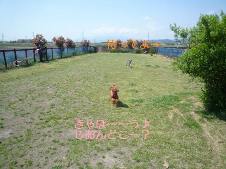 P1000931_convert_20100517180020.jpg