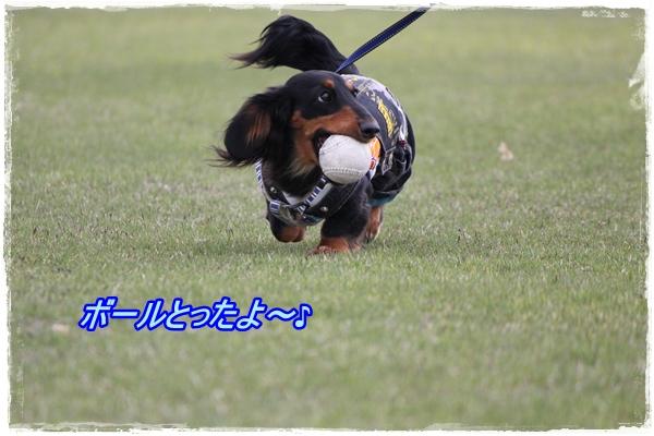 IMG_1070-1.jpg