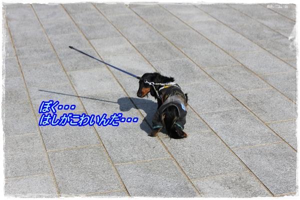 IMG_1272-1.jpg