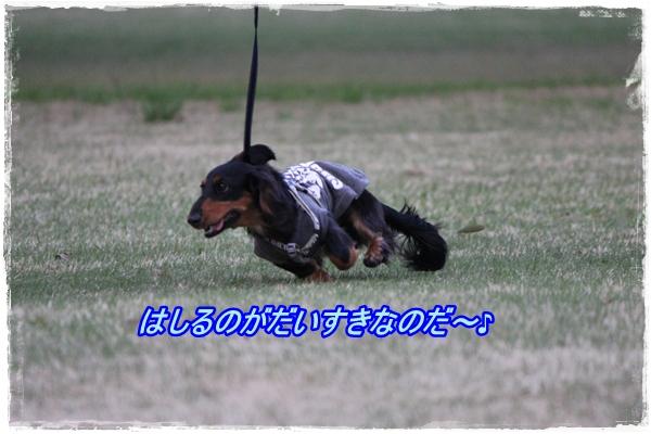 IMG_1493-1.jpg