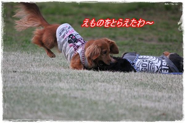 IMG_1508-1.jpg