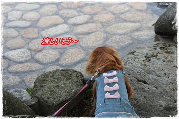 IMG_3175-1.jpg