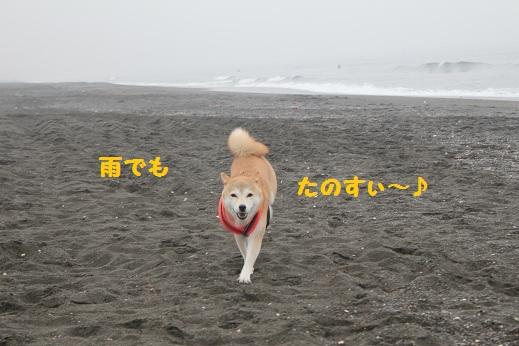 辻堂海岸①