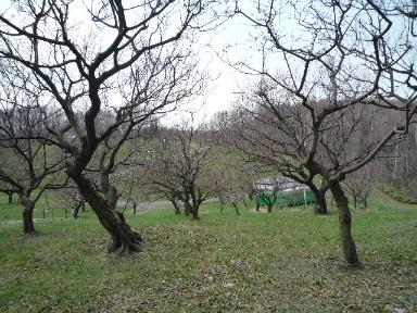 2010_0509(006).jpg