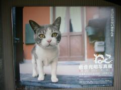 ネコ写真展