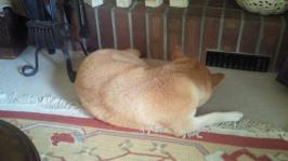 2012Sepふて寝