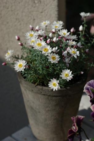 次々咲くペーパーカスケード