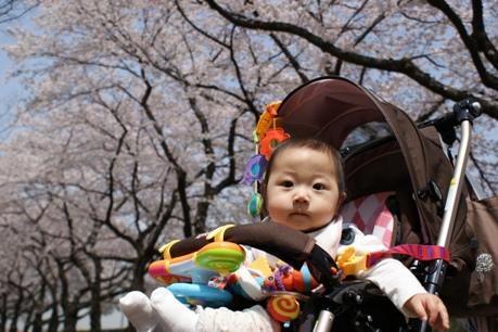 ひ~ちゃんと桜