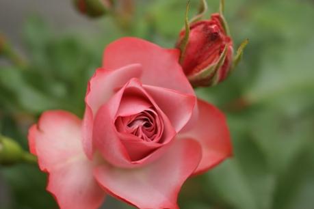 花びらの美しさ☆*。