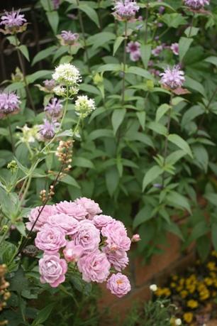 ピンクいっぱいの花壇♪