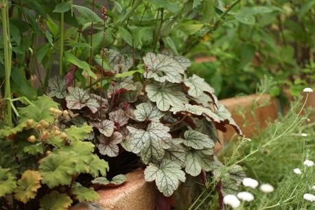 ナチュラルに育つ花壇の植物