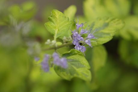 青いお花がかわいい♪