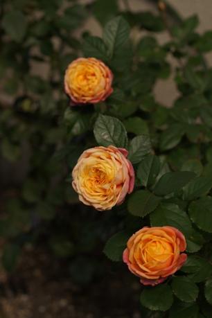 花いっぱいのベビーロマンチカ
