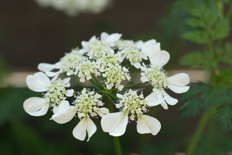 昨年の開花