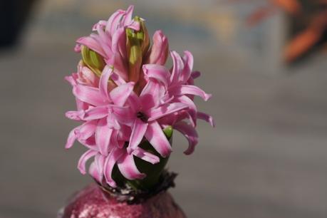 ピンクのかわいいお花♪
