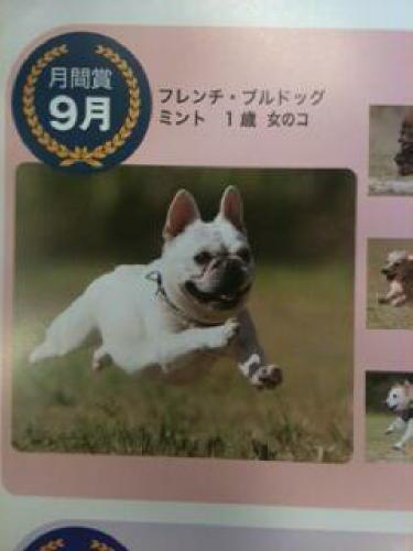 飛行犬1_1