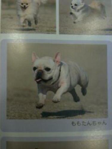 飛行犬2_1