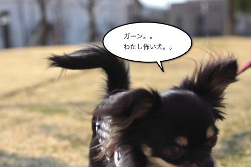 ichi_4727.jpg